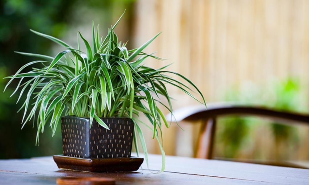 cuidado de las plantas