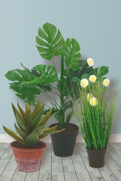 plantas para ventanas